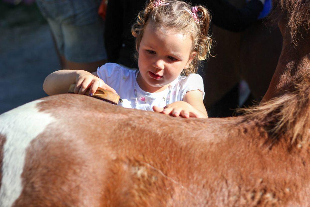 Pony borstelen