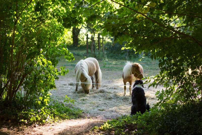 Camping met pony's