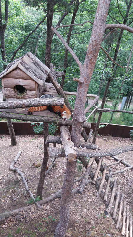 Ronde panda in Parc Animalier d'Auvergne
