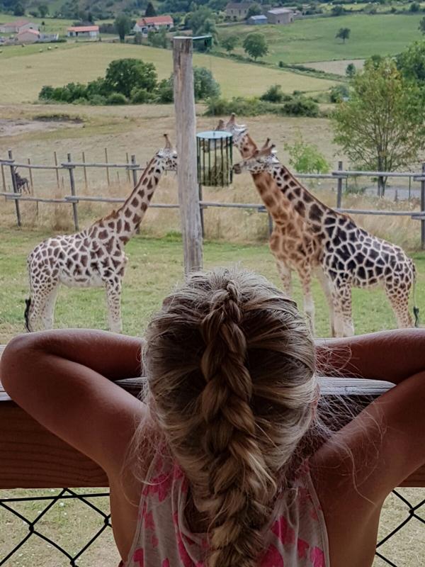 Giraffen in het Parc Animalier d'Auvergne