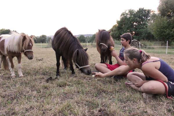 kinderboerderij met ponys