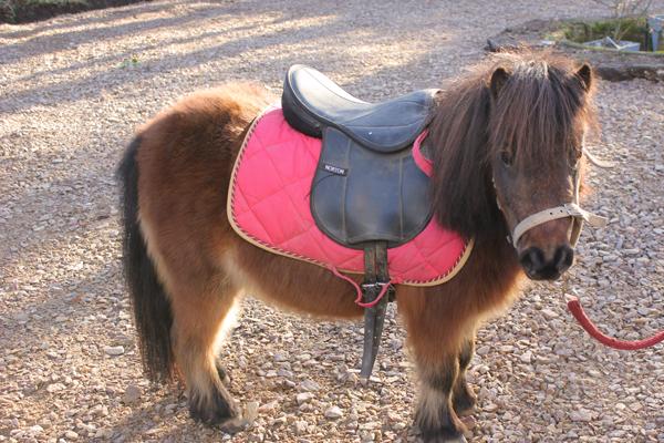 pony rijden op de minicamping